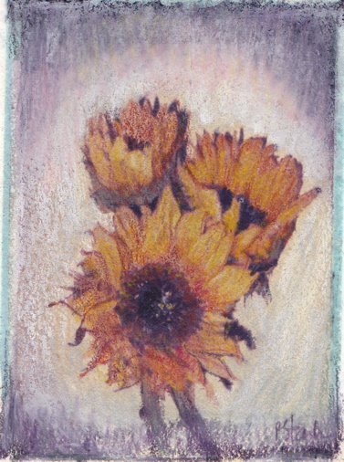 image transfer of sunflowers